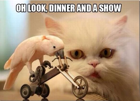 Cat and bird meme
