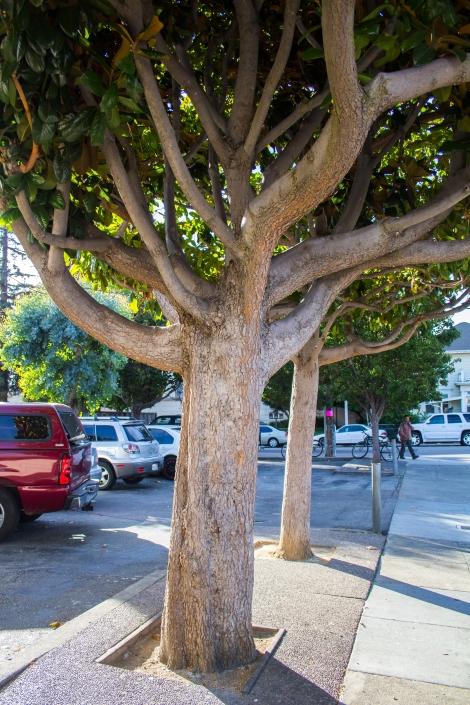 Squid Tree yarnbomb